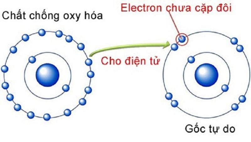 Chất chống oxy hóa là sự tham gia của các hợp chất giúp làm chậm và ngăn chặn quá trình oxy hóa