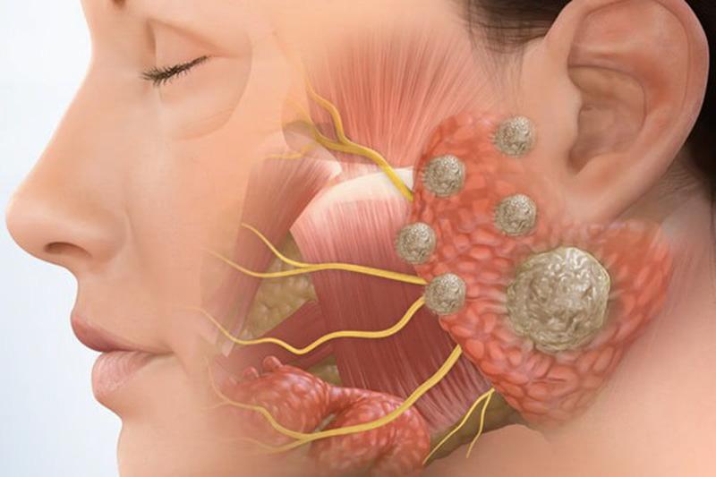 Nước bọt được tiết ra từ tuyến nước bọt nằm trong khoang miệng